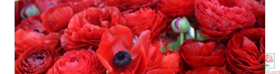 Цветы доставка цветов оптовая по россии — photo 10