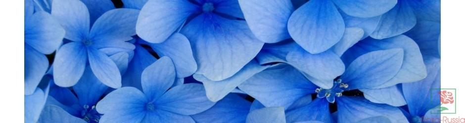 Цветы доставка цветов оптовая по россии дарит цветы