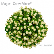 HYP MAGICAL SNOW PRINCE