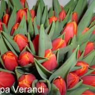 En Vernadi